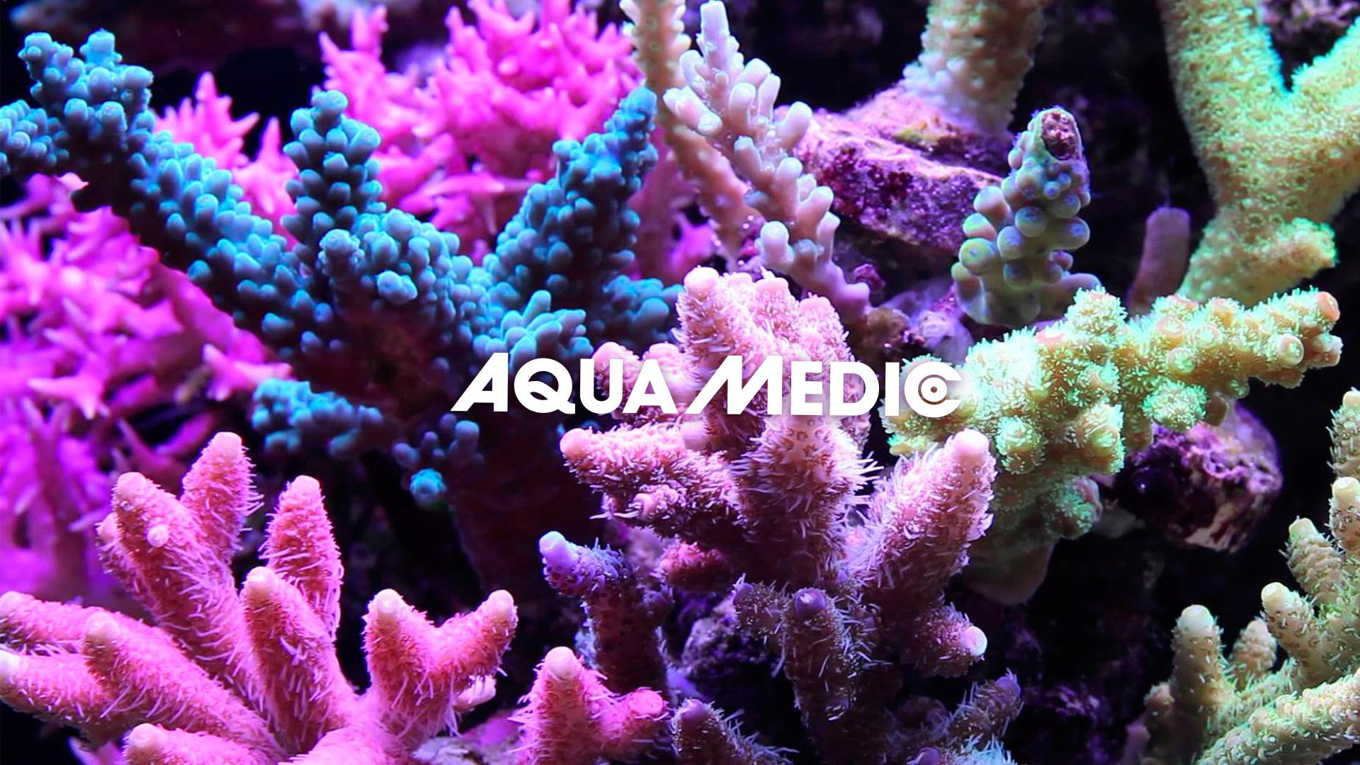 Praca dla Aqua Medic slajder tytułowy 1